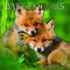 CALENDAR BABY ANIMALS 2020